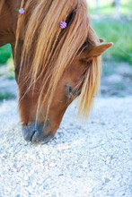 Cheval Crinière Blonde
