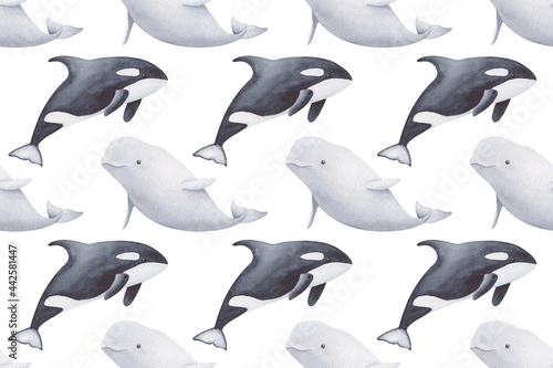 Fotografie, Obraz Watercolor pattern of beluga and orca whale on the white background
