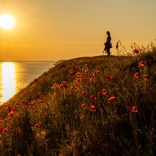 Silhouette Of A Woman Standing On A Grassy Hill Next To The Ocean At Sunset With A Colorful Red Poppy Flower Meadow In The Foreground
