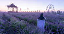 Blue Lavender Field, With Decorative Lamps And A Gazebo.