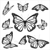 Fototapeta Motyle - B1
