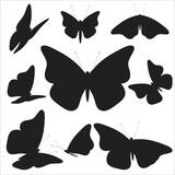 Fototapeta Motyle - B2