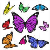 Fototapeta Motyle - B4