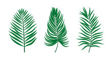 Palm Branches And Leaves. Vector Flat Elements For Design Isolated On White Background.
