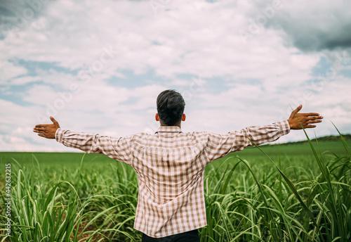 Fototapeta Young Latin farmer working on sugarcane plantation