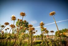 Paisaje De Primavera Con El Campo Y Flores En La España Central En Verano