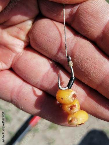 Fotografie, Obraz amo con montatura carp fishing per pescare