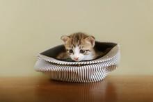 Kitten Hiding On Old Fashion Hat
