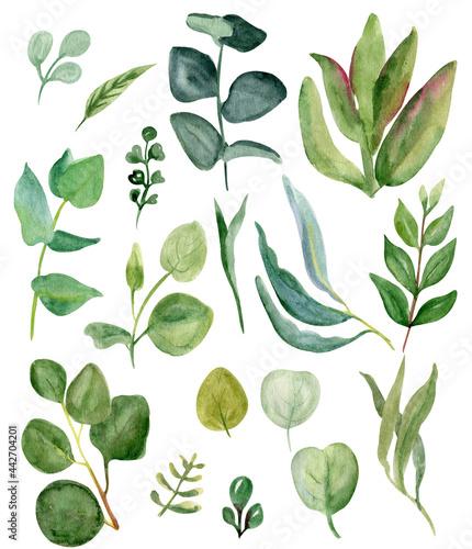 Fényképezés watercolor greenery. Hand drawn set of field herbs, eucalyptus