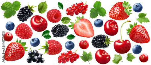 Obraz na plátně Garden berries set isolated on white background