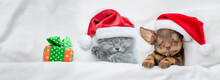 Cute Kitten And Dachshund Puppy Wearing Santa Hats Sleep Together  With Gift Box Under A White Blanket On A Bed At Home. Top Down View. Empty Space For Text