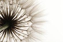 Beautiful Fluffy Dandelion Flower On White Background, Closeup