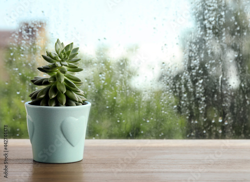 Potted succulent near window on rainy day. Space for text