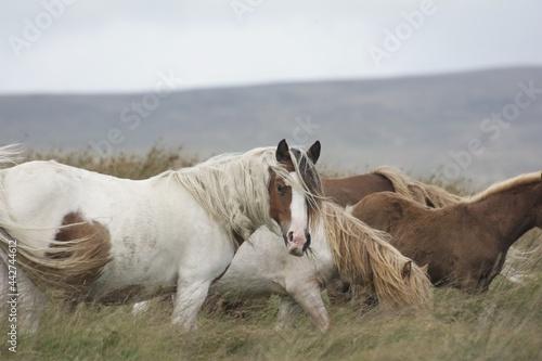 Fotografia horses in the field