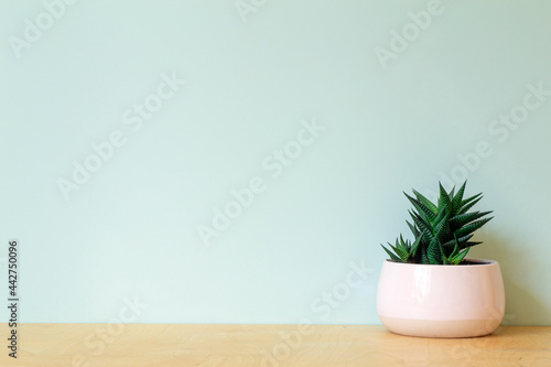 Tableau sur Toile Office table with a plant on a background of an empty colored wall