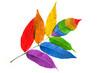 Kolory flagi LGBT są zaczerpnięte z kolorów tęczy. Symbolizują odmienność i równość wszystkich płci i upodobań seksualnych.
