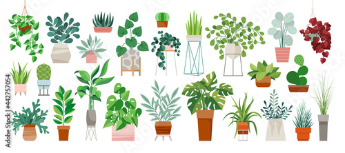 Fotografie, Obraz Set of trendy potted plants for home