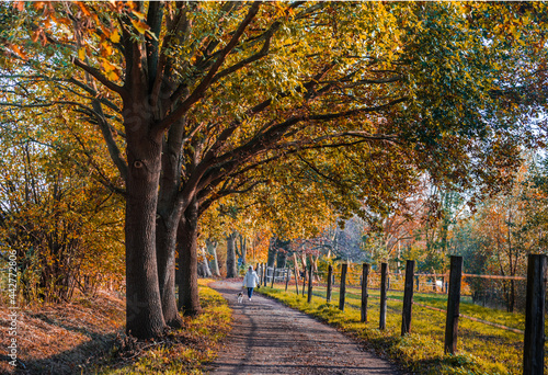 Fotografia Herbst Baum Park Weg Landschaft  Wanderung