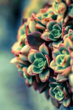 Close Up Of A Cactus