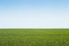 Vast Expansive Green Farm Field On Bright Blue Sky Day, South Dakota.