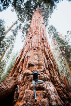 Woman Practices Yoga At Base Of Giant Sequoia Tree, California