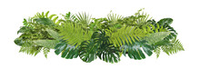 Beautiful Composition With Fern And Other Tropical Leaves On White Background. Banner Design