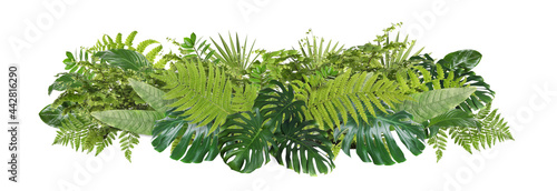 Obraz na plátně Beautiful composition with fern and other tropical leaves on white background