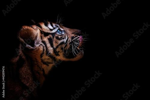 Fotografiet portrait of a tiger suumatran