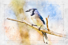 This Photograph Of A Blue Jay (Cyanocitta Cristata) Perched On A Branch Was Digitally Enhanced To Create An Artistic Impression Of The Subject.