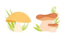 Different Types Of Forest Edible Mushrooms Set Cartoon Vector Illustration