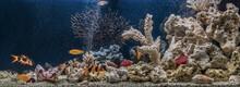 Freshwater Fish Tank Designed In Pseudo-sea Style. Aqua Scape And Aqua Design.