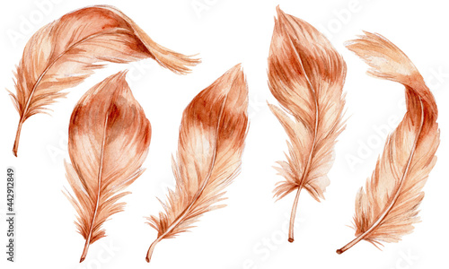 Obraz na płótnie Set of brown feathers; watercolor hand drawn illustration; with white isolated b