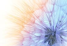 Dandelion Seeds Close-up On A Blue-orange Sky Background