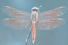 Amazing Shape Of Dragonfly From All Angle With Colorful Background For Beautiful Macro Photography Images Collection