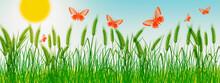 Beautiful Summer Stock Illustration. Butterflies Over A Wheat Field
