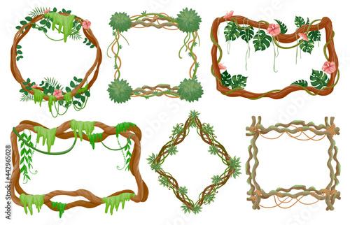 Fotografia Jungle liana frames