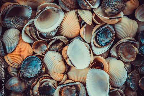 Foto variety of sea shells from beach