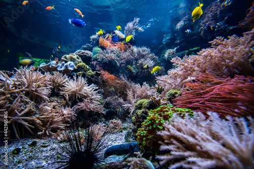 Canvas Coral colony and coral fish.  Underwater view