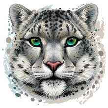 Snow Leopard. Color Portrait Of A Snow Leopard In Watercolor Style On A White Background. Digital Vector Graphics.
