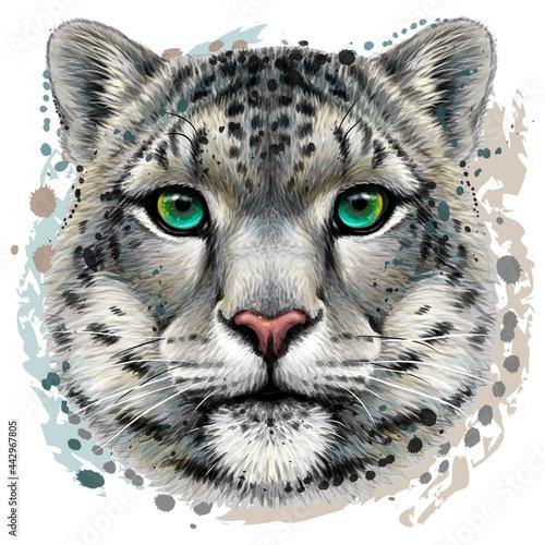Snow leopard Fototapet