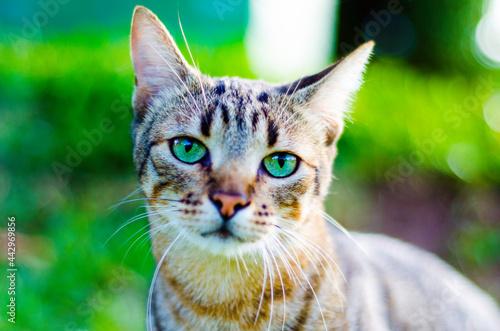 Obraz na plátne olhar felino