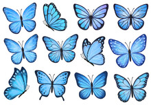 Set Of Blue Butterflies Isolated On White Background. Watercolor. Illustration. Template, Blue  Butterfly Spring Illustration.
