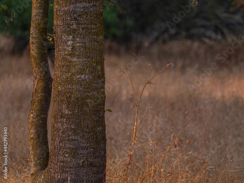 Oak woodland landscape in Hot Dry California Summer  3 Fotobehang
