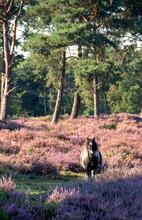Little Horse On A Meadow