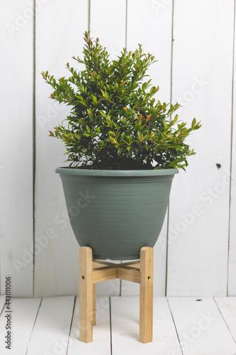 Fototapeta Pots of plants of various sizes and varieties