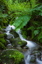Clean Water Waterfall In Luxuriant Green Vegetation. As Fragas Do Eume, Galicia, Spain