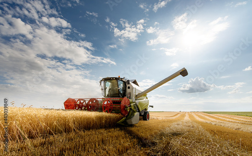 Foto Harvesting combine in the wheat.