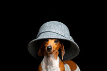 Image Of Dog Hat Dark Background