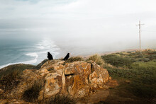 Black Crows On Coastal Cliff With Ocean On Background
