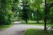 Drzewa w parku Świerklaniec, woj. Ślaskie